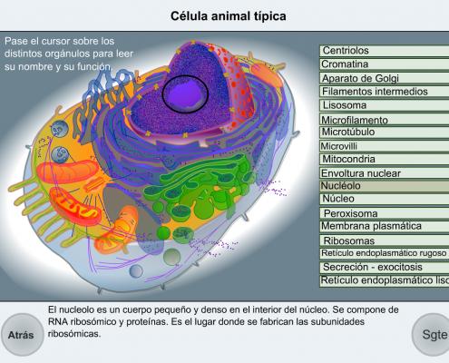 componente celulares
